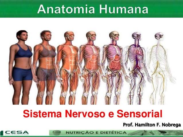 Sistema Nervoso e Sensorial Prof. Hamilton F. Nobrega