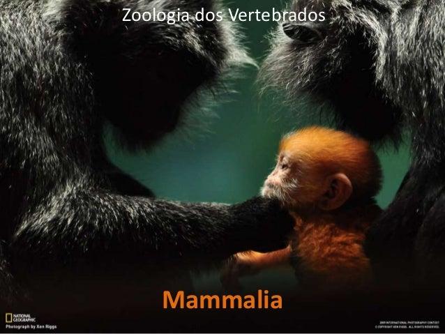 Zoologia dos Vertebrados  Mammalia