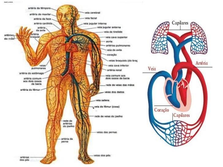 Resultado de imagem para corpo humano