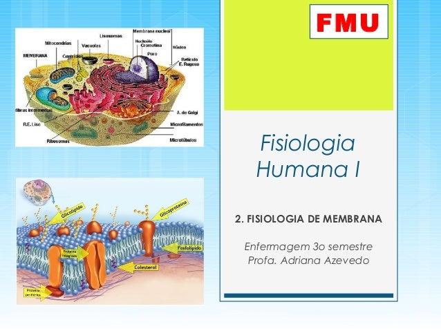 Fisiologia Humana I 2. FISIOLOGIA DE MEMBRANA Enfermagem 3o semestre Profa. Adriana Azevedo FMU