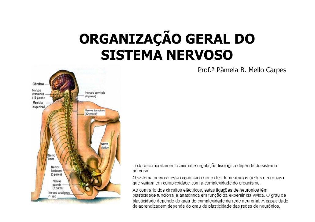 ORGANIZAÇÃO GERAL DO   SISTEMA NERVOSO              Prof.ª Pâmela B. Mello Carpes