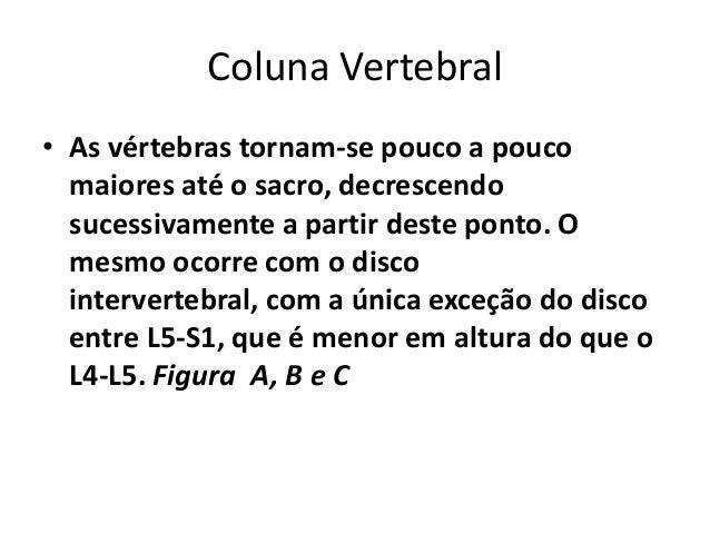 Coluna Vertebral • As vértebras tornam-se pouco a pouco maiores até o sacro, decrescendo sucessivamente a partir deste pon...