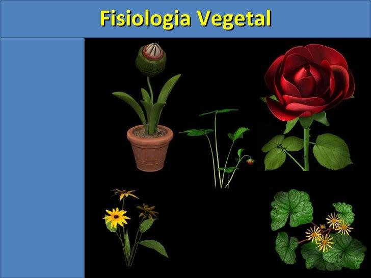 <ul><ul><li>Fisiologia Vegetal </li></ul></ul>