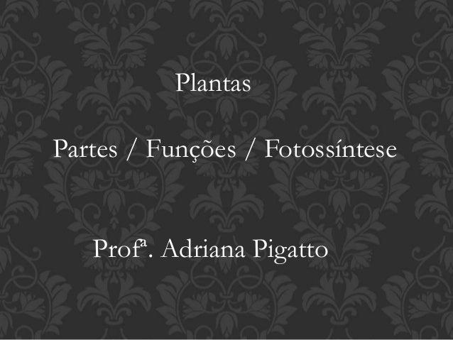 Plantas  Partes / Funções / Fotossíntese  Profª. Adriana Pigatto