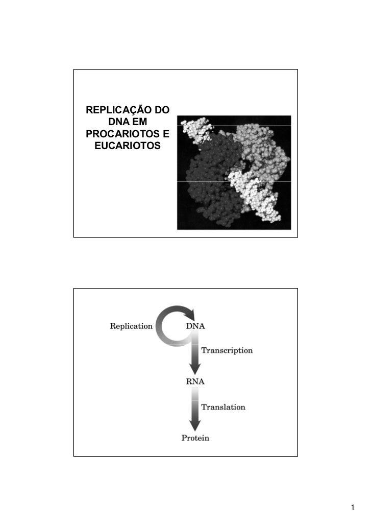 REPLICAÇÃO DO   DNA EMPROCARIOTOS E EUCARIOTOS                1