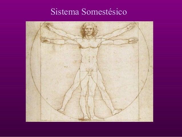 Sistema Somestésico