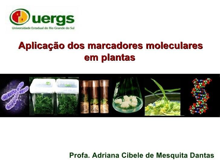 Aplicação dos marcadores moleculares             em plantas         Profa. Adriana Cibele de Mesquita Dantas