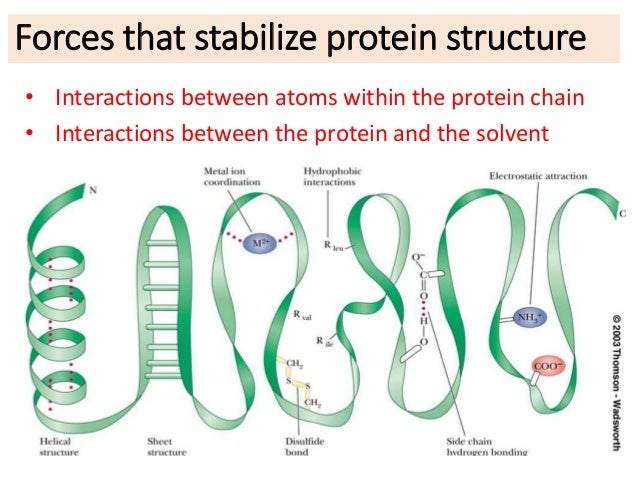 protein-stability-9-638.jpg (638×479)