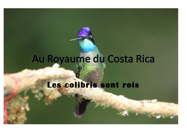 Les colibris sont rois