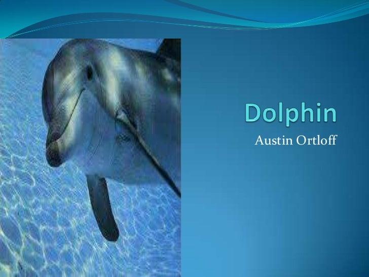 A ustin dolphin prestion
