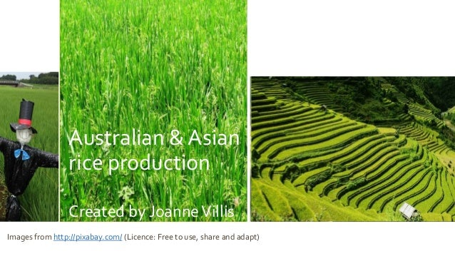 Australian and Asian Rice Production