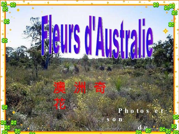 Fleurs d'Australie Photos et son  du Web 澳 洲 奇 花