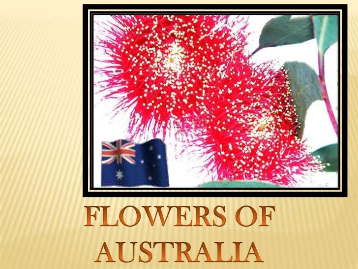 FLOWERS OF AUSTRALIA<br />