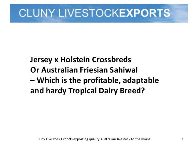 Cluny Livestock Exports exporting quality Australian livestock to the world 1 Jersey x Holstein Crossbreds Or Australian F...