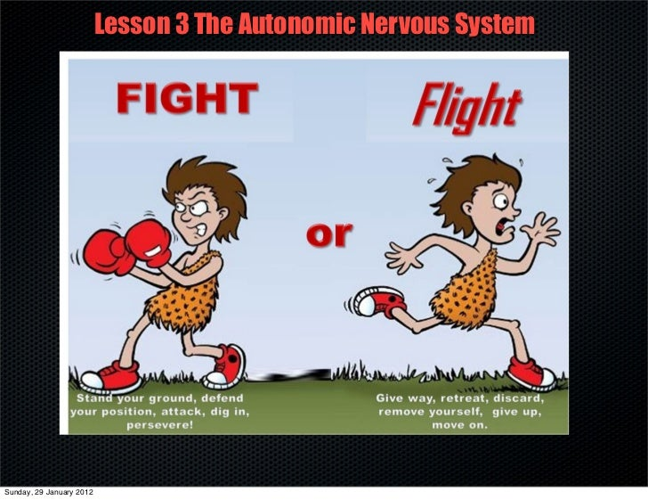 Lesson 3 The Autonomic Nervous SystemSunday, 29 January 2012