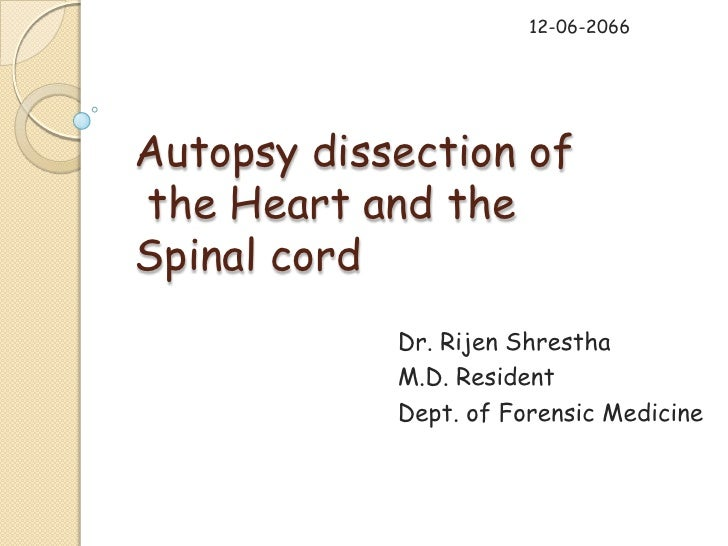 Autopsy dissection of heart and spinal cord