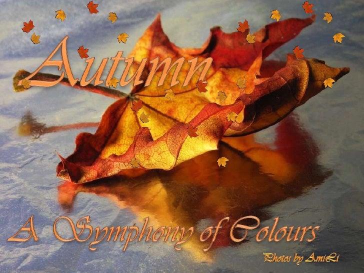 Autumn   A symphony of colours