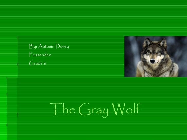 By: Autumn Dorey Fessenden Grade 6 The Gray Wolf