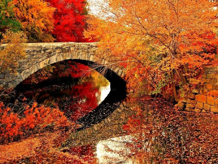 Autumn idyll