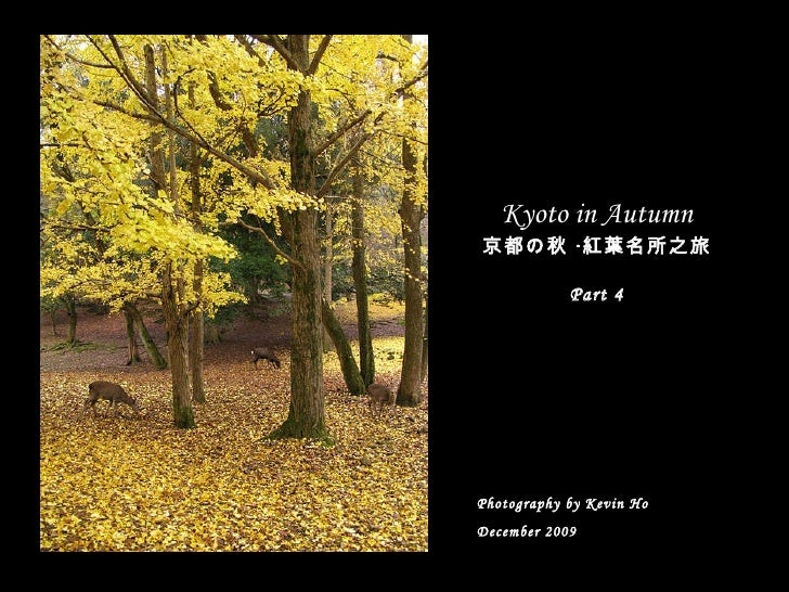 Autumn Leaves In Kyoto   Part 4 (Dec 2009)