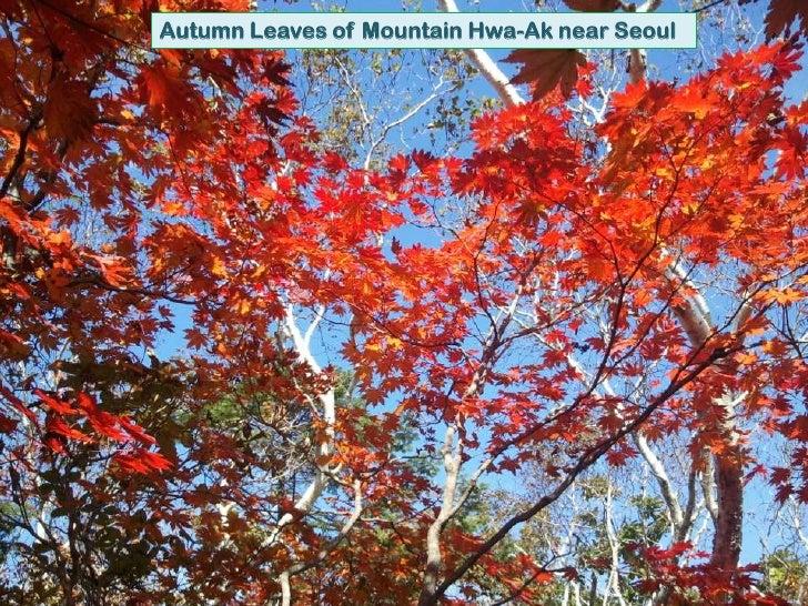 Autumn Leaves of Mountain Hwa-Ak near Seoul<br />