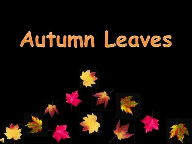 Autumn leaves (v.m.)