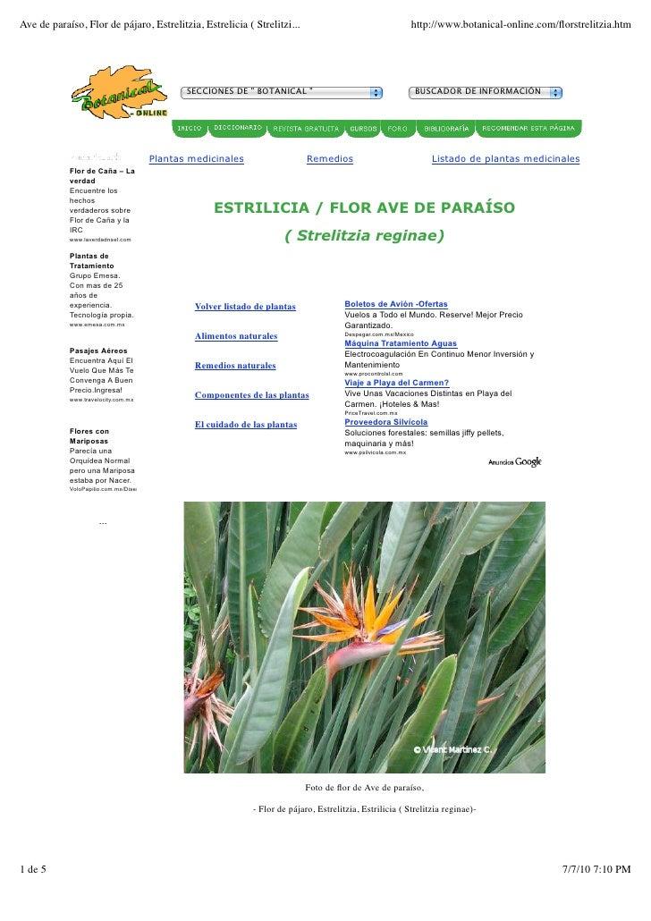 Ave de paraíso, Flor de pájaro, Estrelitzia, Estrelicia ( Strelitzi...                                          http://www...