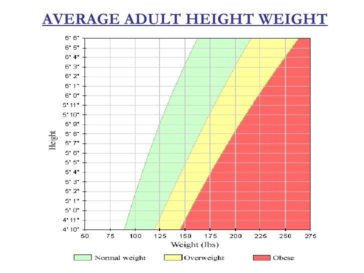average height of an adult