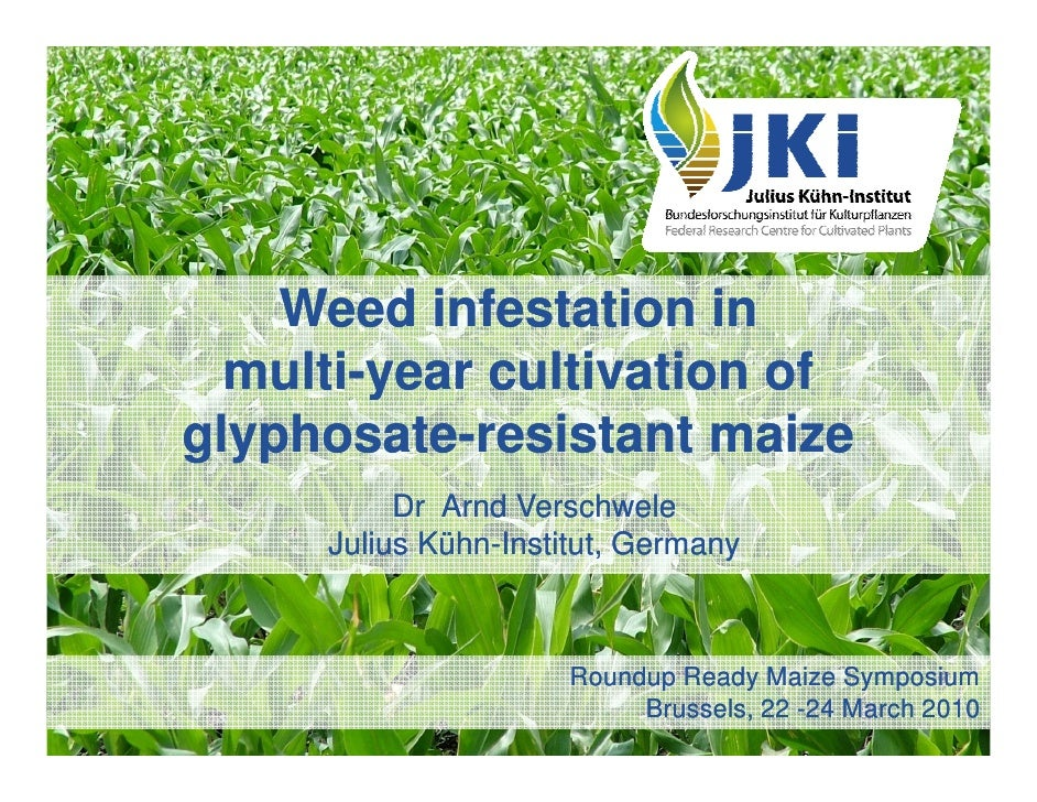 Weed infestation in   multi-   multi-year cultivation of glyphosate- glyphosate-resistant maize           Dr Arnd Verschwe...