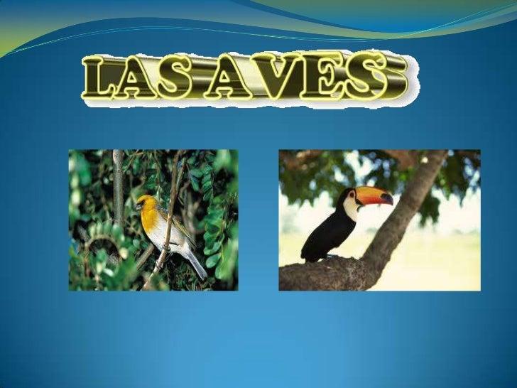 CONCEPTO Las aves son animales vertebrados, de sangre caliente, que  caminan, saltan o se mantienen sólo sobre las extrem...