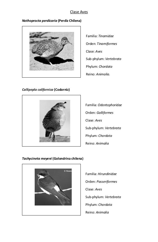 Clasificación taxonómica de aves comúnes en nuestro entorno