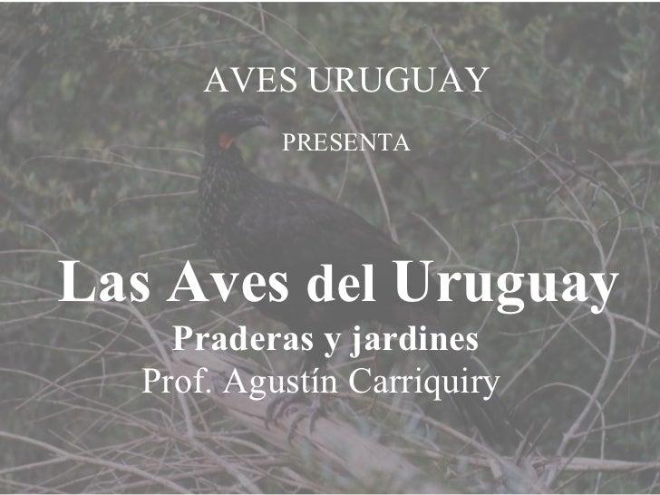 AVES URUGUAY PRESENTA Las Aves  del  Uruguay Praderas y jardines  Prof. Agustín Carriquiry