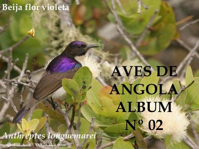 Anthreptes longuemarei AVES DE ANGOLA ALBUM Nº 02 Beija flor violeta