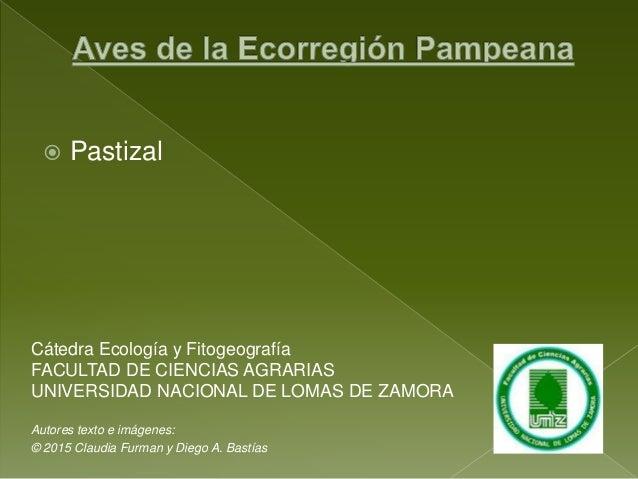  Pastizal Cátedra Ecología y Fitogeografía FACULTAD DE CIENCIAS AGRARIAS UNIVERSIDAD NACIONAL DE LOMAS DE ZAMORA Autores ...