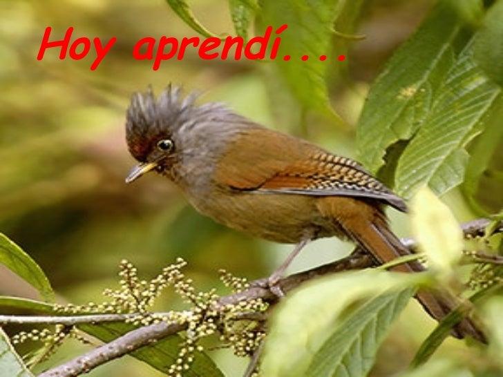 Aves del Himalaya