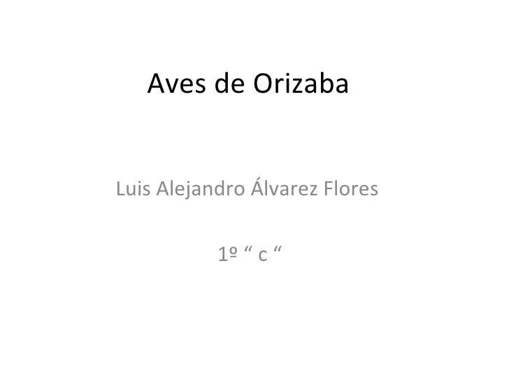 "Aves de Orizaba  Luis Alejandro Álvarez Flores  1º "" c """