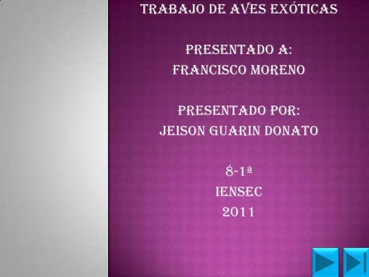 TRABAJO DE AVES EXÓTICAS     PRESENTADO A:   FRANCISCO MORENO    PRESENTADO POR:  JEISON GUARIN DONATO           8-1ª     ...