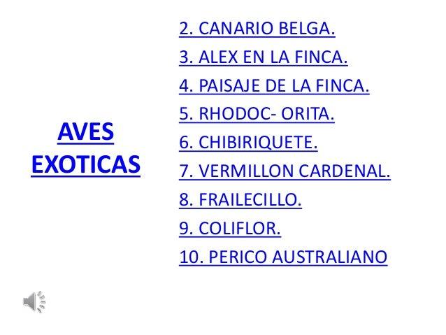 AVES  EXOTICAS  2. CANARIO BELGA.  3. ALEX EN LA FINCA.  4. PAISAJE DE LA FINCA.  5. RHODOC- ORITA.  6. CHIBIRIQUETE.  7. ...