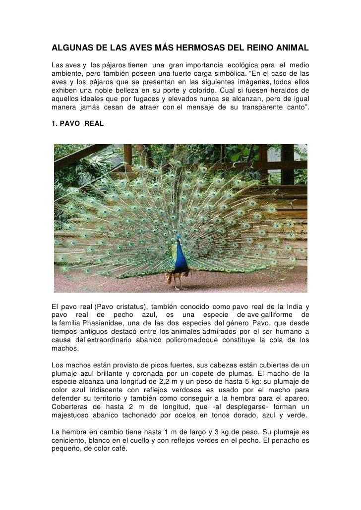 ALGUNAS DE LAS AVES MÁS HERMOSAS DEL REINO ANIMALLas aves y los pájaros tienen una gran importancia ecológica para el medi...