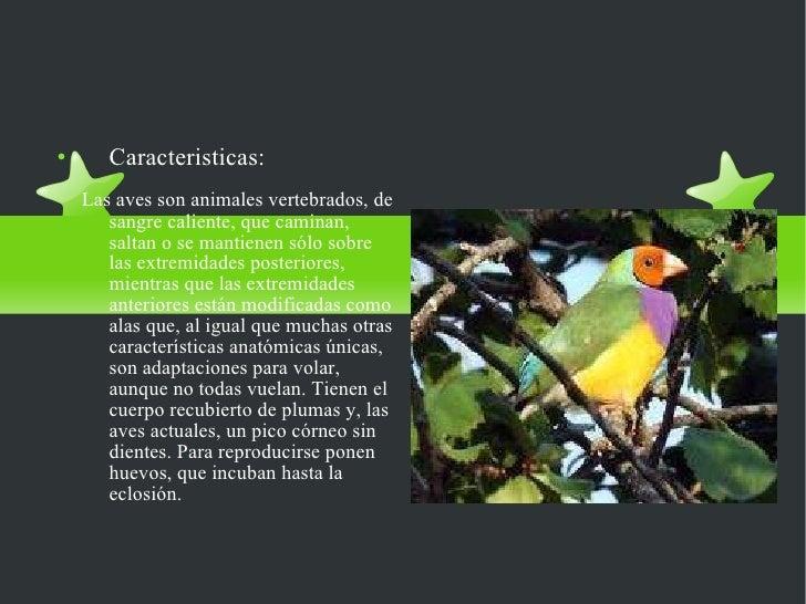 LAS AVES <ul><li>Caracteristicas: </li></ul><ul><li>Las aves son animales vertebrados, de sangre caliente, que caminan, sa...