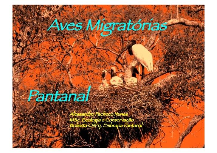Aves MigratóriasPantanal     Alessandro Pacheco Nunes     MSc. Ecologia e Conservação     Bolsista CNPq, Embrapa Pantanal
