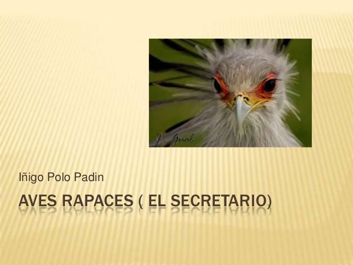 Iñigo Polo PadinAVES RAPACES ( EL SECRETARIO)