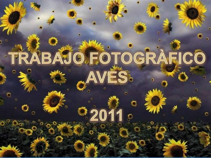TRABAJO FOTOGRÀFICO<br />AVES<br />2011<br />
