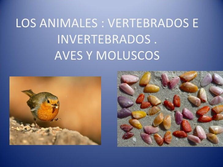 LOS ANIMALES : VERTEBRADOS E INVERTEBRADOS . AVES Y MOLUSCOS
