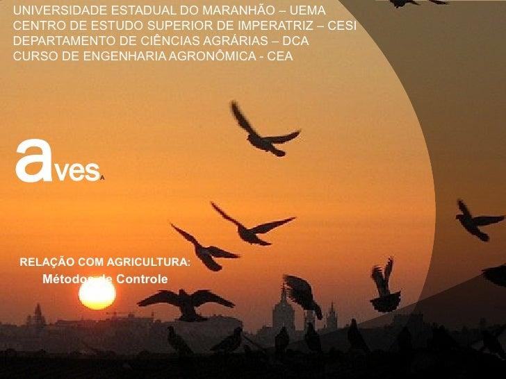 UNIVERSIDADE ESTADUAL DO MARANHÃO – UEMACENTRO DE ESTUDO SUPERIOR DE IMPERATRIZ – CESIDEPARTAMENTO DE CIÊNCIAS AGRÁRIAS – ...