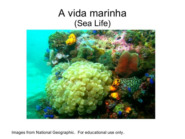 A vida marinha                                (Sea Life)Images from National Geographic. For educational use only.