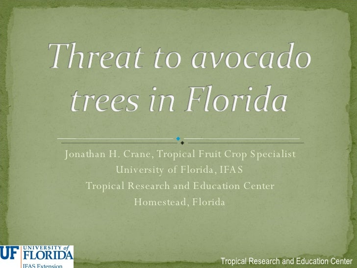 Threat to Avacado Trees in Florida