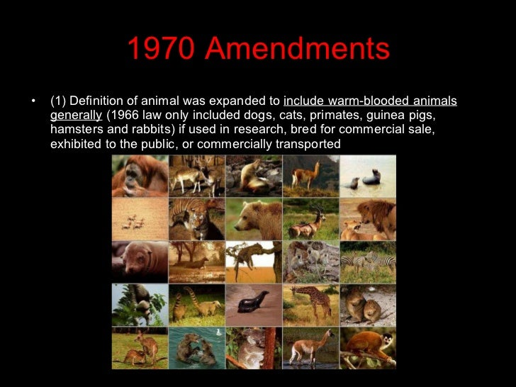 the issues of the animal abuse and the animal welfare act of 1966 Current animal welfare legislation works to protect industry, not the animals factory-farmed animals are kept in miserable conditions where they cannot express their normal behaviours, contrary to the stated principles in the animal welfare act in new zealand, animals and their products generate over 20 billion dollars each year.