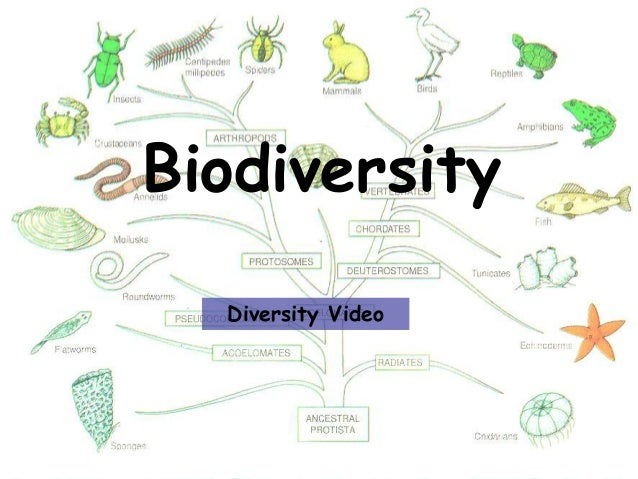 Awesome diversity introduction powerpoint 2012