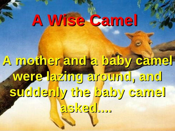 A Wise Camel